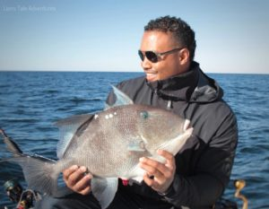Triggerfish, Gray Regulations - Fish Rules App